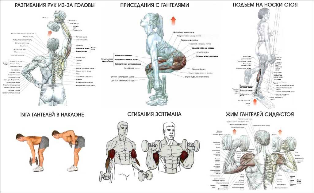 Упражнения для мышц в домашних условиях без гантелей 139