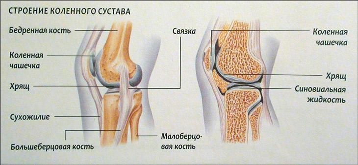 Изображение - Боль в коленном суставе при приседании причины stroenie_kolennogo_sustava